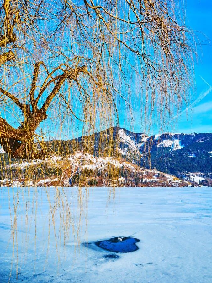 在泽勒的垂柳树看见湖,滨湖采尔,奥地利 图库摄影
