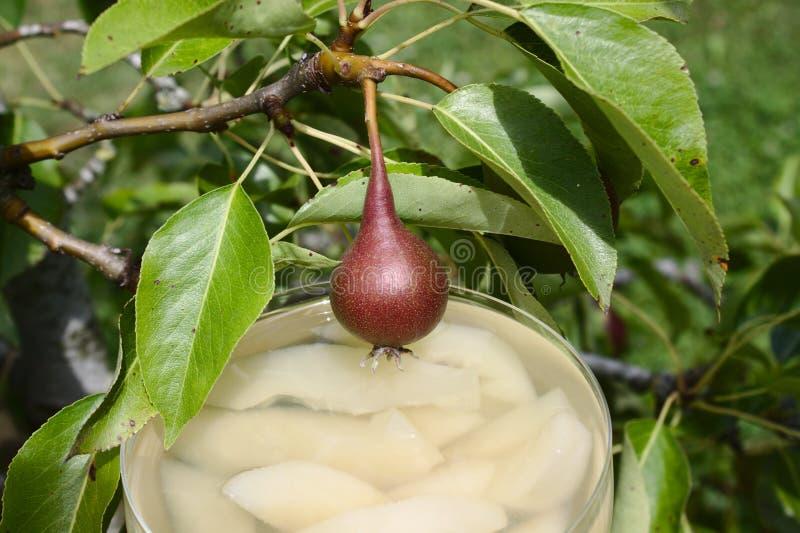 在洋梨树的梨点心 免版税库存图片