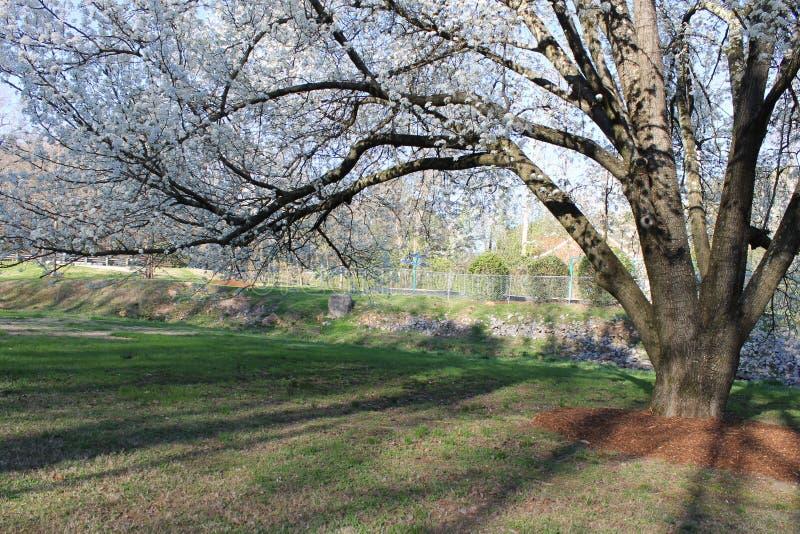 在洛克伍德公园的春天花 库存照片