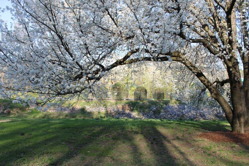 在洛克伍德公园的春季 库存照片