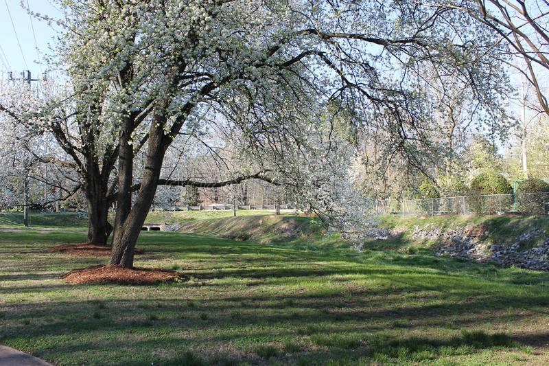 在洛克伍德公园的春日 免版税库存图片