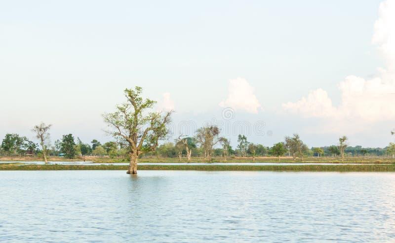 在洪水中的树 免版税库存照片