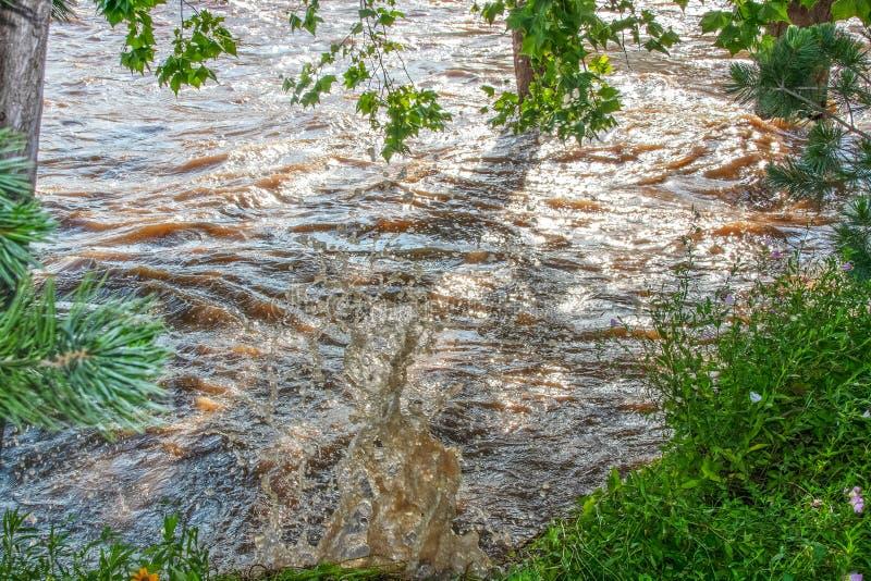 在洪水和大飞溅部分浸没的树在岸附近作为动荡快速流动的水腐蚀有野花的河岸 免版税图库摄影