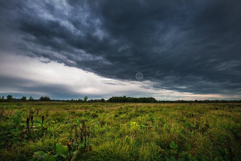 在洪水草甸的多雨早晨在鄂毕河附近 r 库存照片