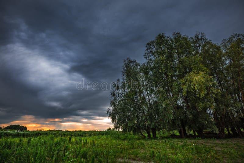 在洪水草甸的多雨早晨在鄂毕河附近 r 库存图片