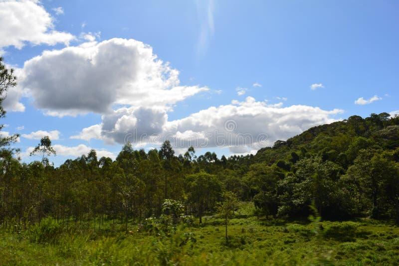 在活动中的森林 免版税图库摄影