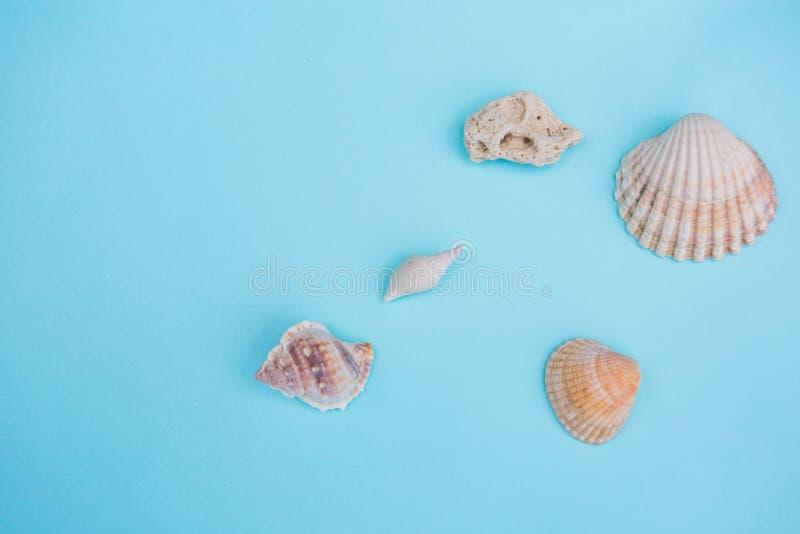 在浅兰的背景的壳 图库摄影