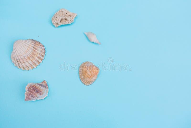 在浅兰的背景的壳 免版税库存图片