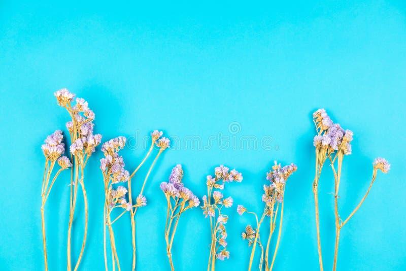 在浅兰的背景的干紫罗兰色statice花 免版税库存照片