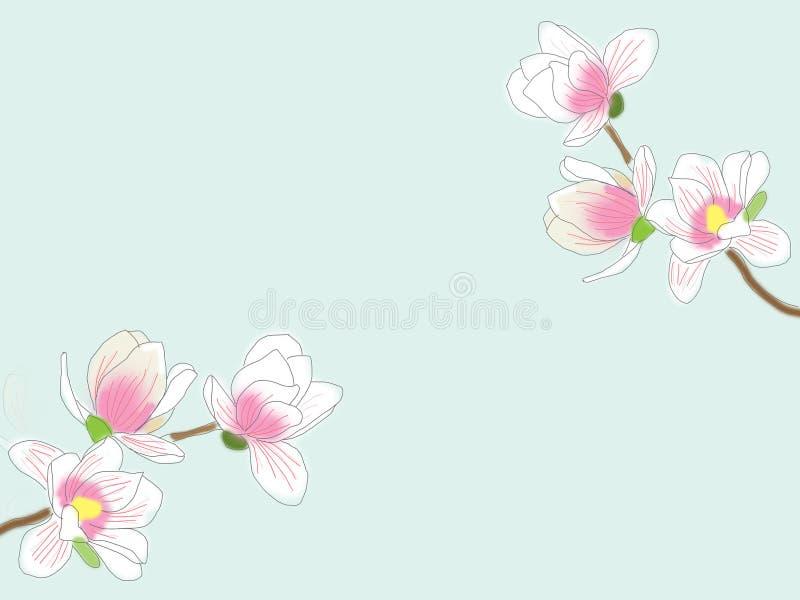 在浅兰的背景的画的白色木兰花 库存图片