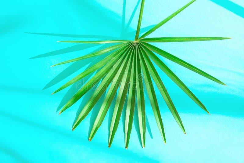 在浅兰的背景的美丽的圆的尖刻的棕榈叶在阳光泄漏 顶视图舱内甲板位置 热带假期旅行 免版税库存照片