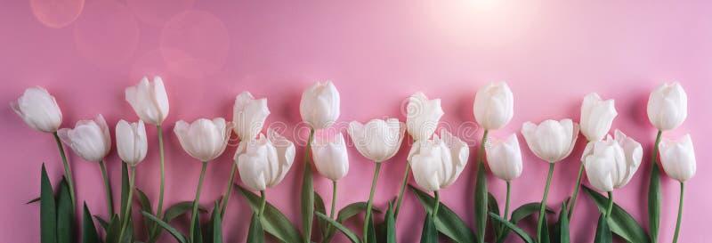 在浅粉红色的背景的白色郁金香花 贺卡或婚礼邀请 平的位置 免版税图库摄影