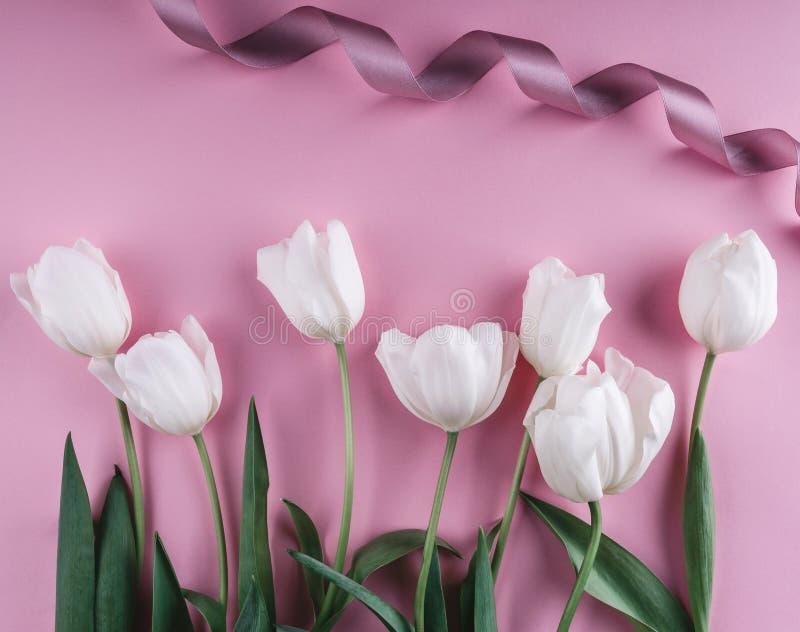 在浅粉红色的背景的白色郁金香花 贺卡或婚礼邀请 库存图片