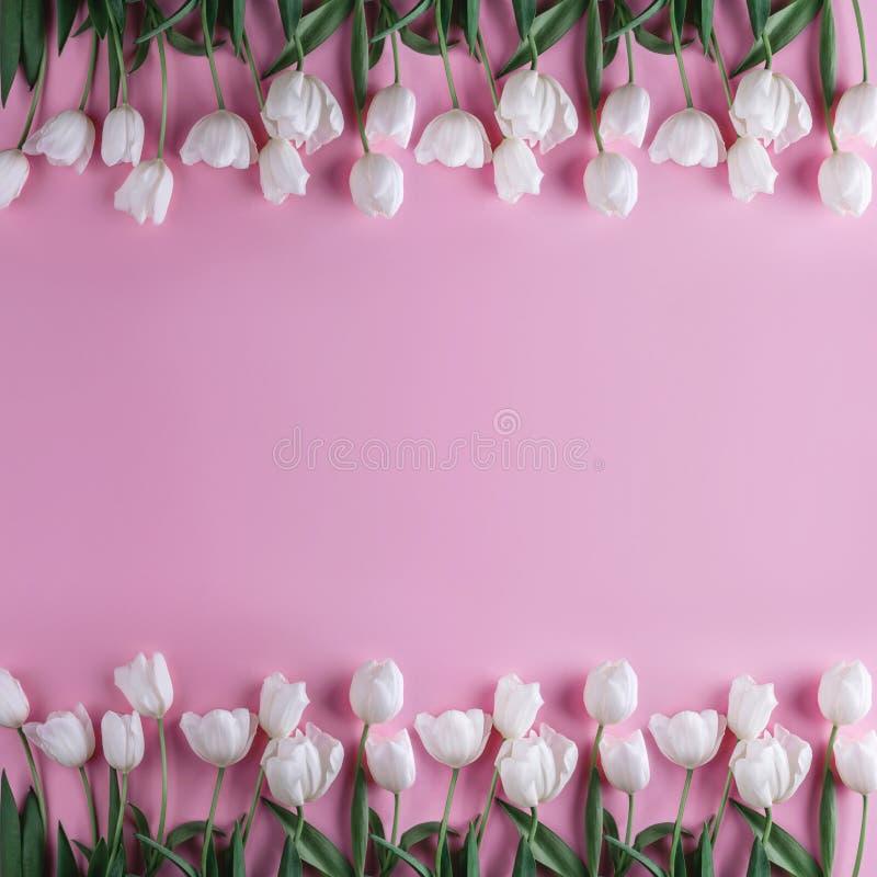 在浅粉红色的背景的白色郁金香花 贺卡或婚礼邀请 图库摄影