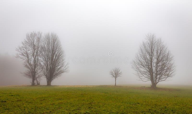 在浓雾的两棵偏僻的树在捷克Moravian高地的绿色gras 免版税库存图片