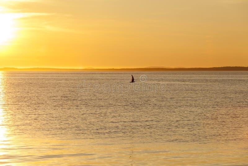 在海上的海鸥剪影五颜六色的日落的 和谐和宁静想法  免版税图库摄影