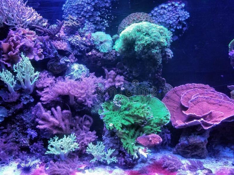 在海下的珊瑚 库存照片