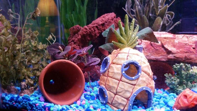 在海下的菠萝 免版税库存照片