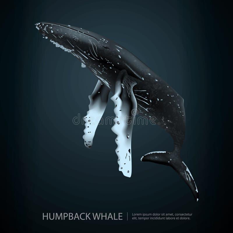 在海下的驼背鲸 库存例证