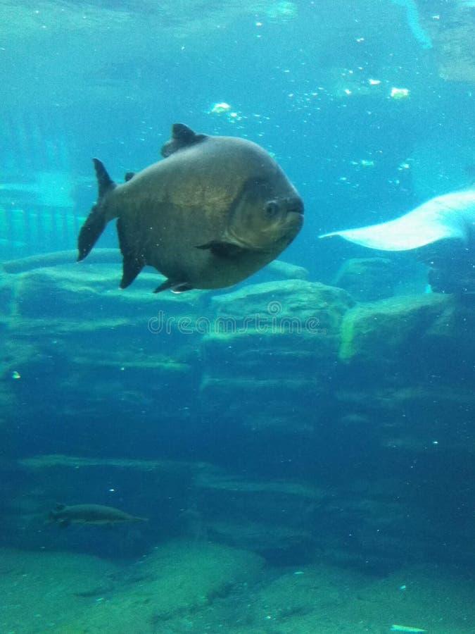 在海世界的鱼游泳 免版税库存照片
