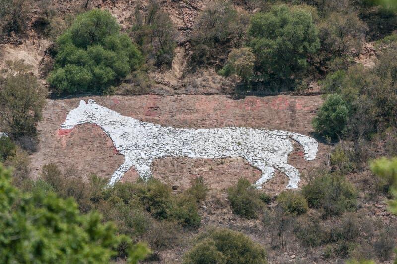 在海军小山的白马在布隆方丹 库存照片