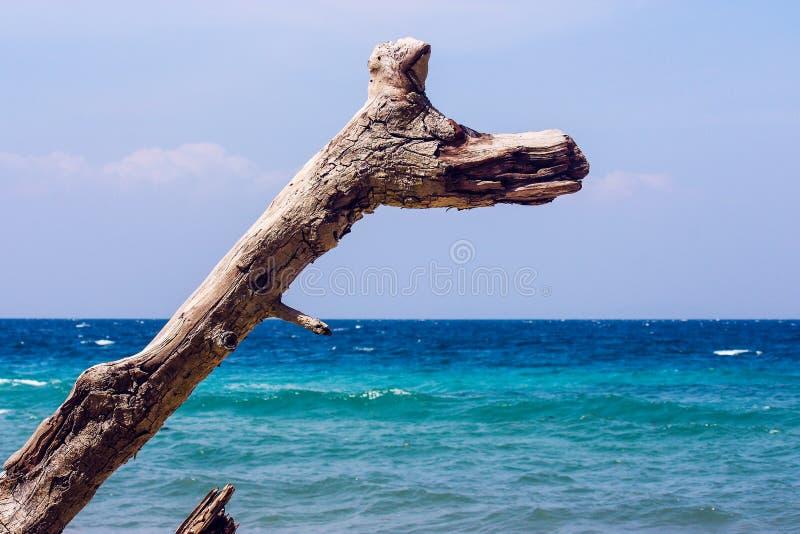 在海前面的分支 免版税库存照片