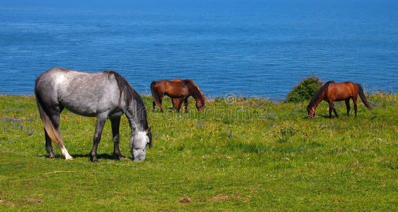 在海前面的马 免版税图库摄影