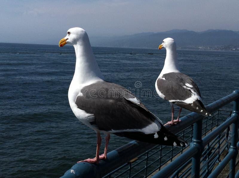 在海啸以后的圣莫尼卡码头 免版税库存照片