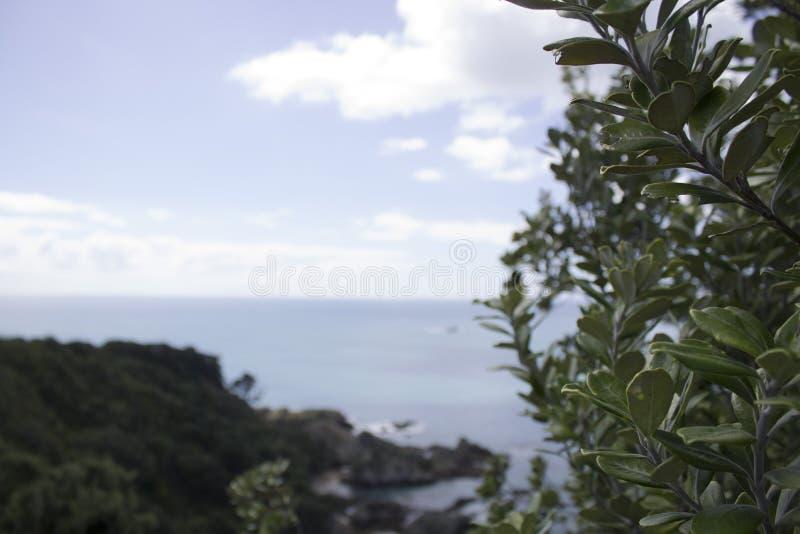 在海岛上的Pohutukawa 免版税库存图片