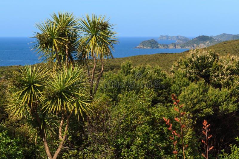 在海岛海湾的新西兰沿海风景  库存图片