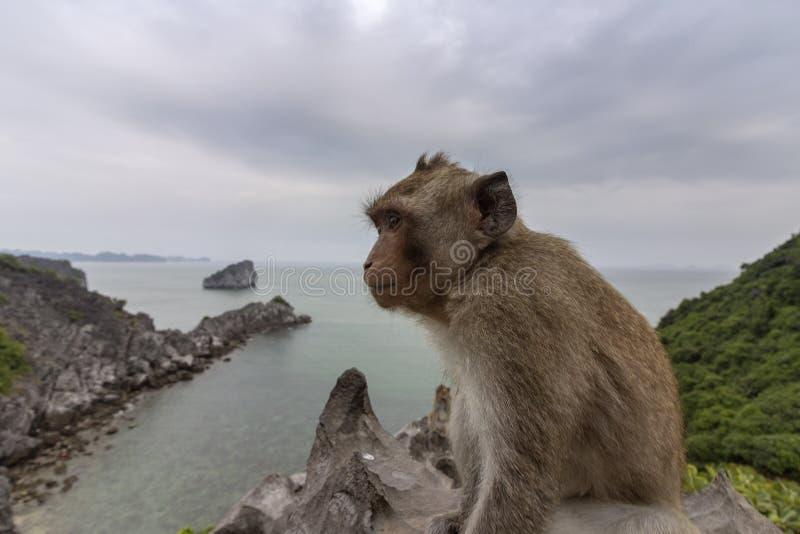 在海岛海滩情景Lan Ha海湾,地标目的地,猫Ba海岛,越南登上上面的猴子  免版税库存照片