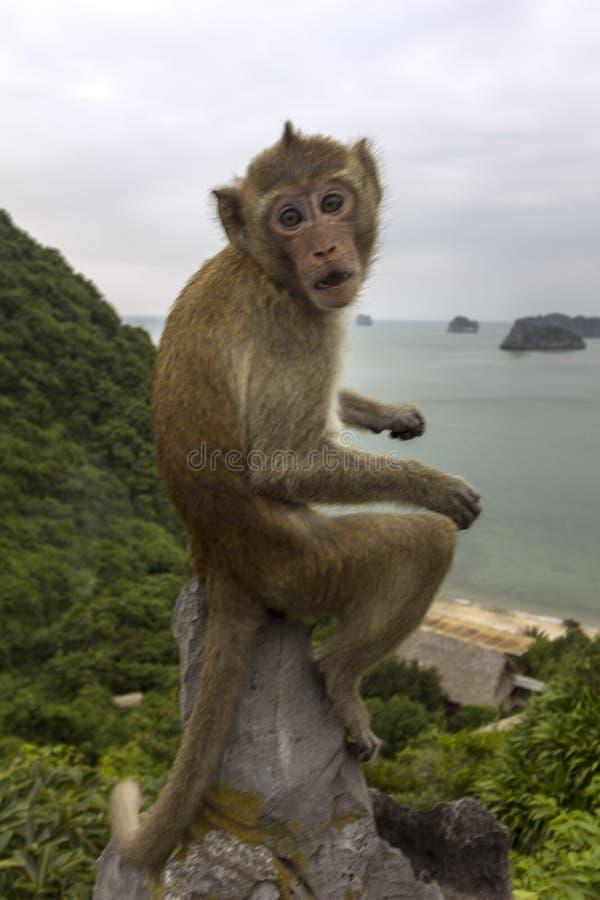 在海岛海滩情景Lan Ha海湾,地标目的地,猫Ba海岛,越南登上上面的猴子  免版税图库摄影