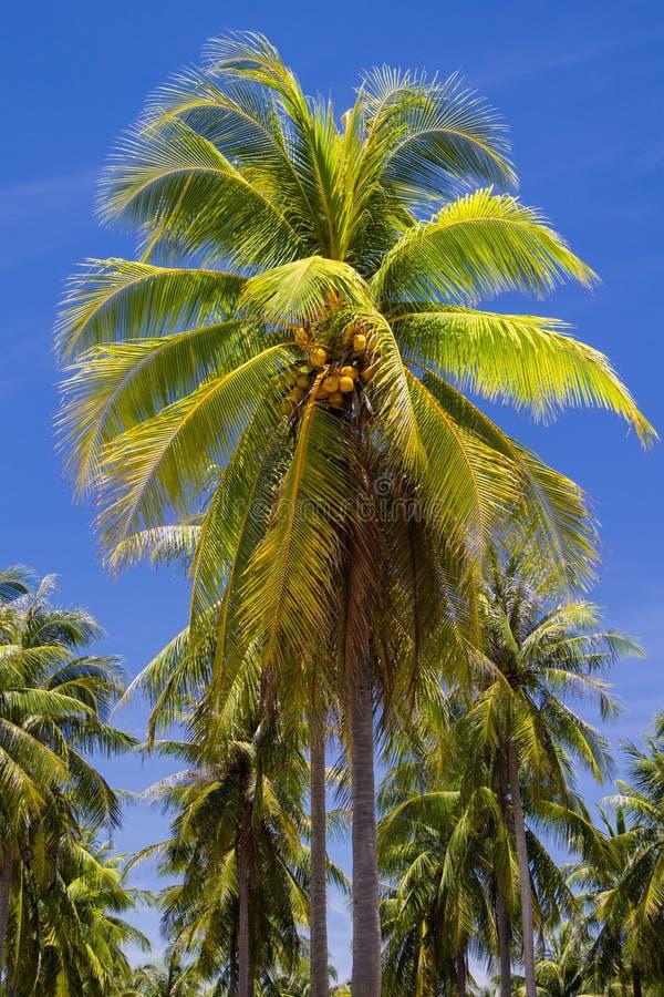 在海岛的椰子树 库存图片