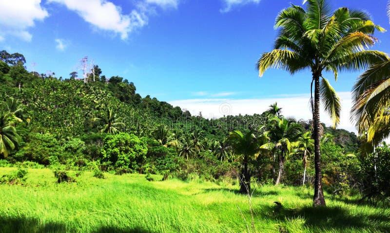 在海岛的绿叶 库存图片