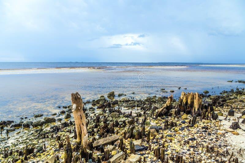 在海岸的异常的老腐烂的树 库存照片