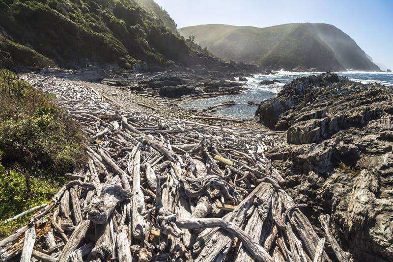 在海岸的浮动木头在Tsitsikamma国家公园,南非 库存图片