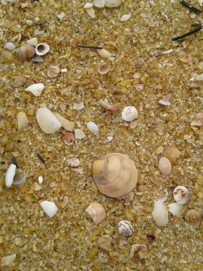 在海岸的海壳,斯里兰卡 免版税库存图片