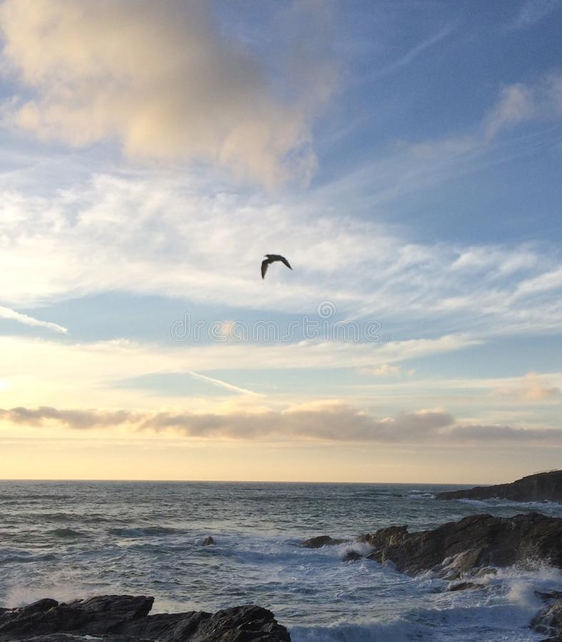 在海岸的海鸥 免版税库存图片