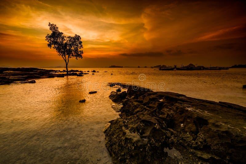 在海岸线的偏僻的树 库存图片