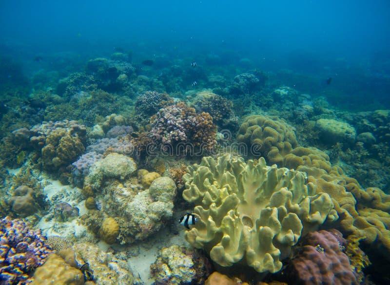 在海底的五颜六色的珊瑚礁生态系 与净水和阳光的异乎寻常的海滨风景 库存照片