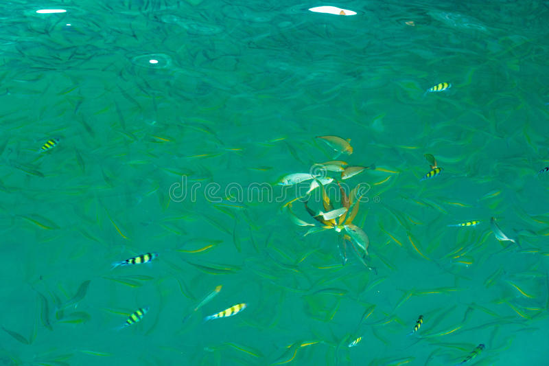 在海披披岛,泰国,热带海洋钓鱼 库存图片