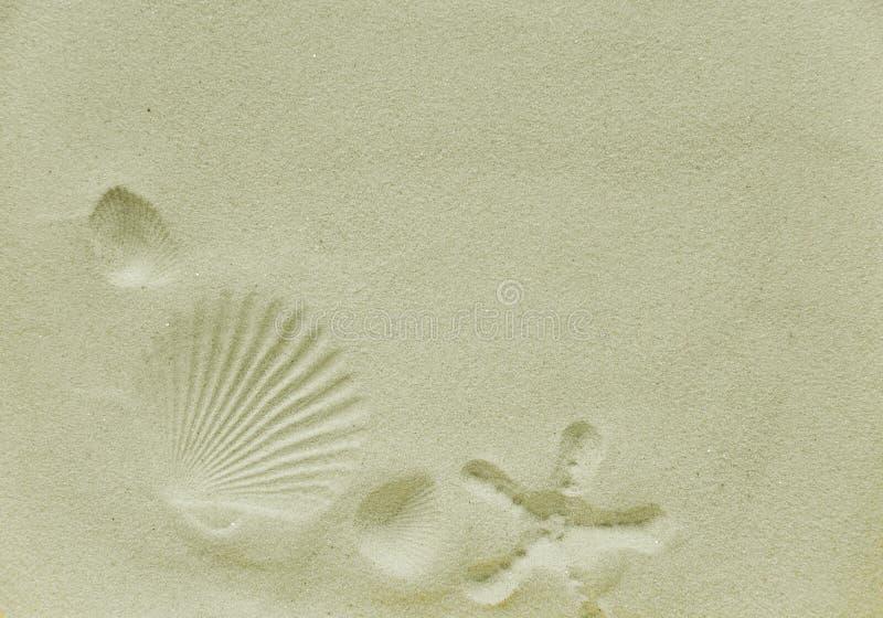 在海沙的壳版本记录和海星 库存照片