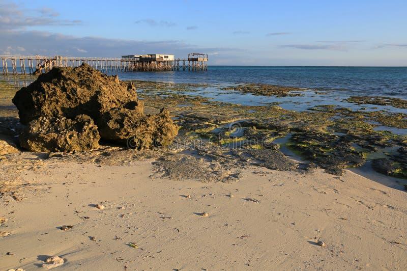 在海洋岸的低潮 库存图片
