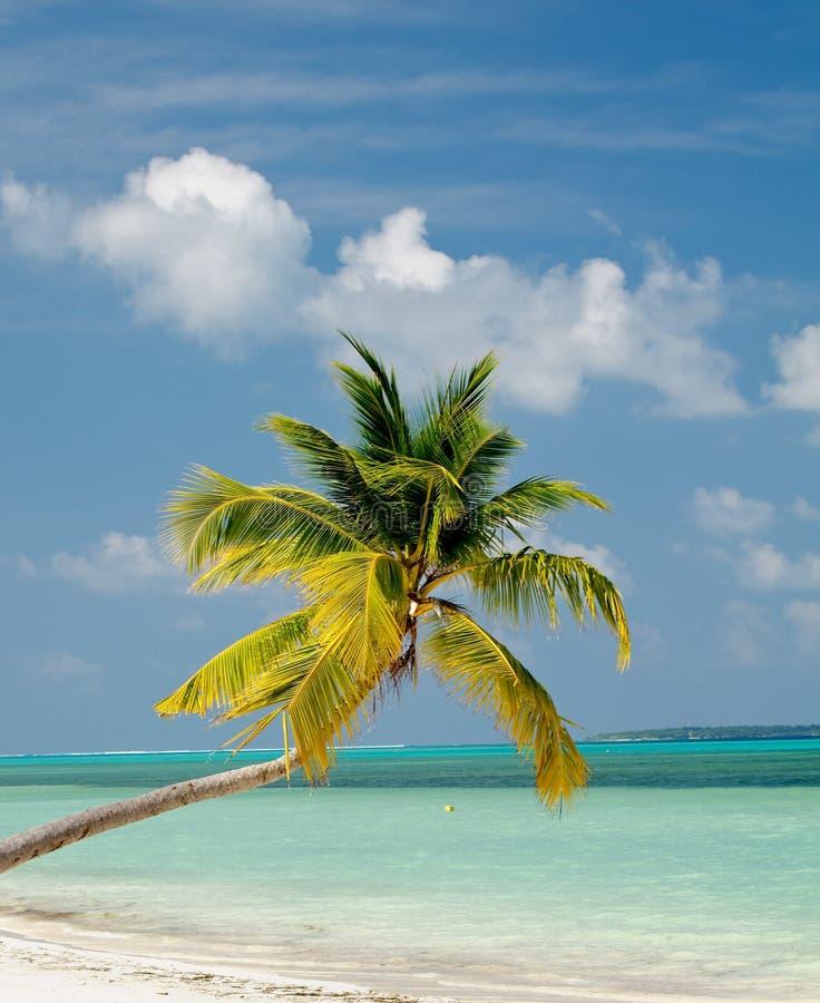 在海洋海滩的棕榈树 免版税库存图片