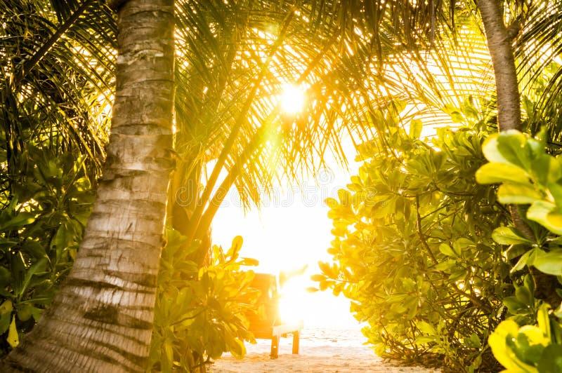 在海洋热带绿叶通过被看见的叶子的日落  免版税库存图片