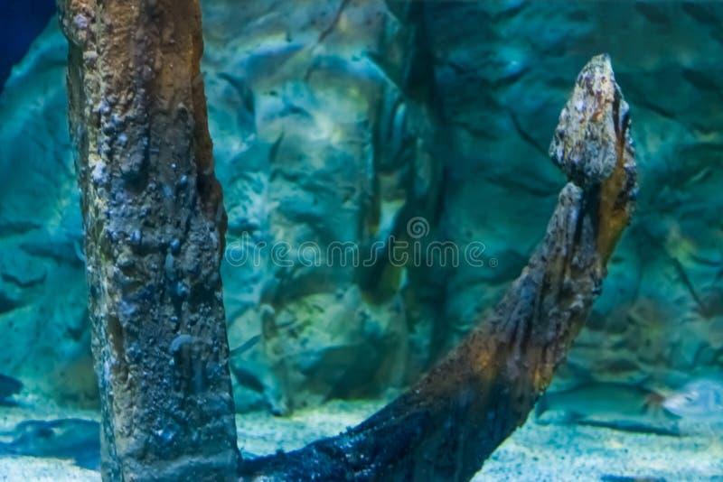 在海洋的底部的老生锈的船船锚在特写镜头,葡萄酒水族馆装饰 免版税库存图片