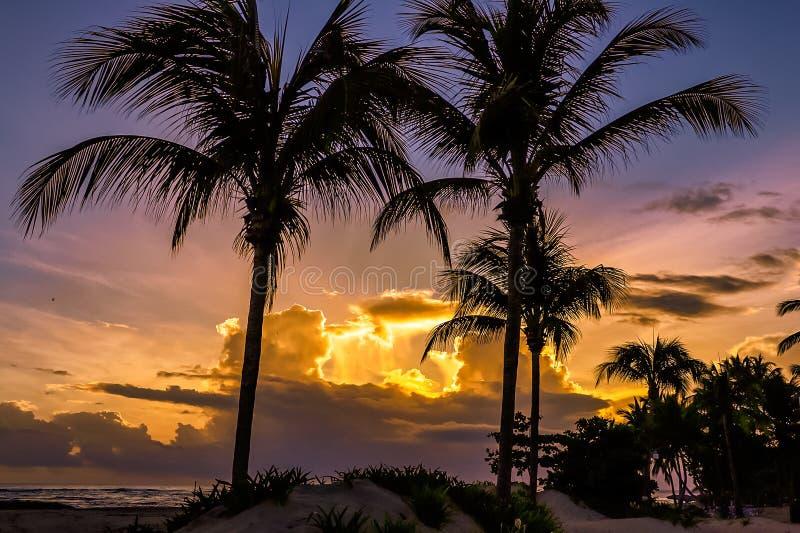 在海洋的日出有棕榈树的在加勒比 普拉塔港 库存图片