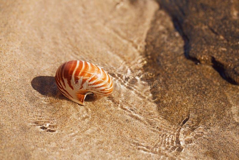 在海海滩的贝壳舡鱼与在太阳光下的波浪 图库摄影