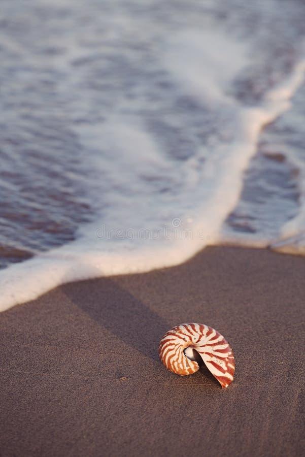 在海海滩的贝壳舡鱼与在日出太阳光下的波浪 免版税库存照片