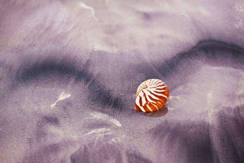 在海海滩的贝壳舡鱼与在日出太阳光下的波浪 库存照片